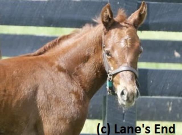 Vekoma as a foal at Lane's End
