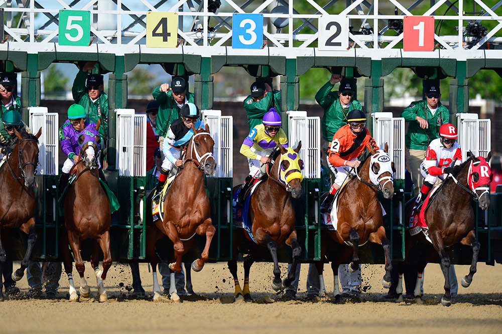 Horses at the starting gates.