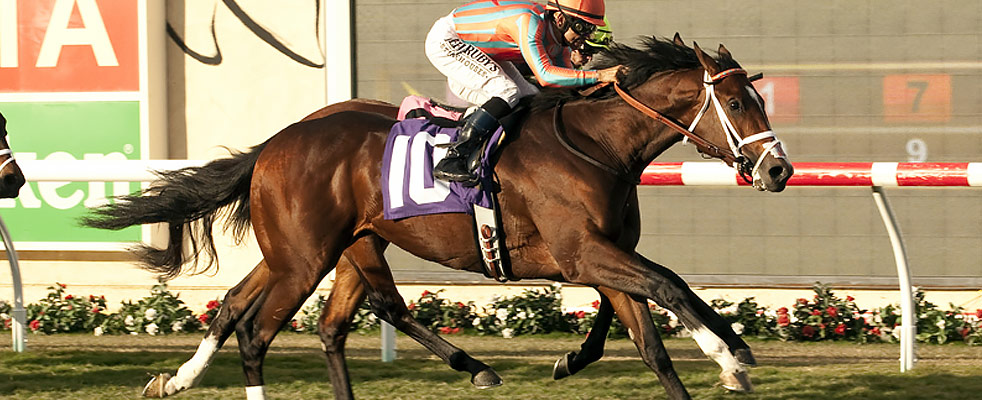 Conquest Typhoon 2017 Kentucky Derby Amp Oaks May 5 And