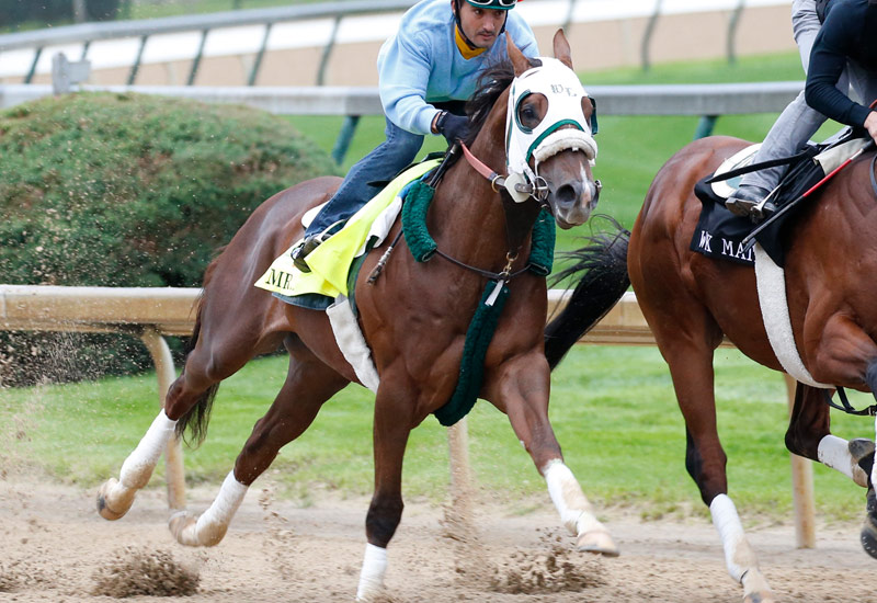 Mr Z 2016 Kentucky Derby Amp Oaks May 6 And 7 2016