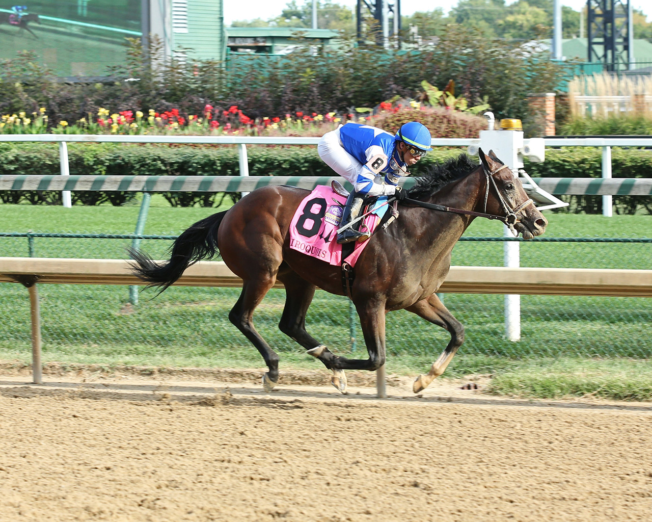 Road To The Kentucky Derby Horse Profile Dennis Moment