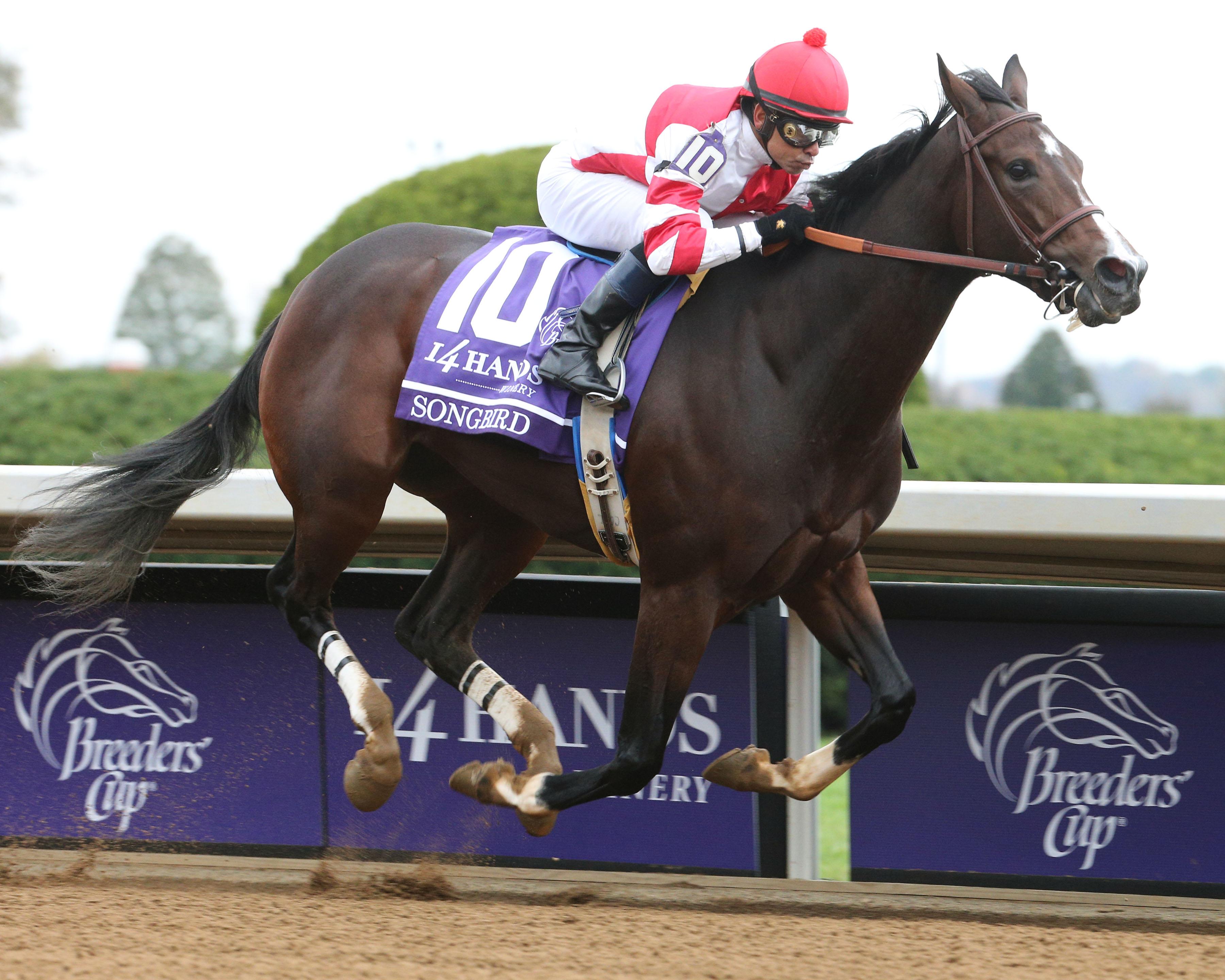 Songbird A Potential Wildcard For 2016 Kentucky Derby