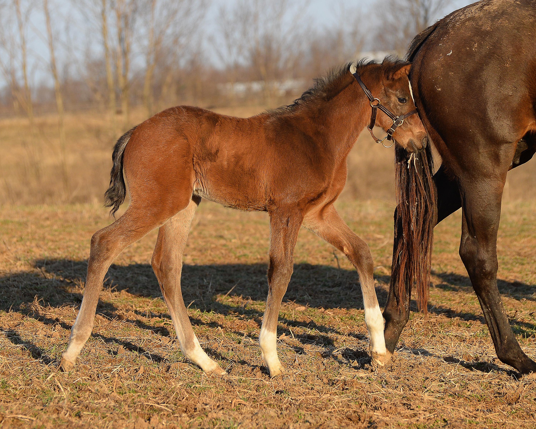 Crib for sale louisville ky - Always Dreaming Walking As A Foal