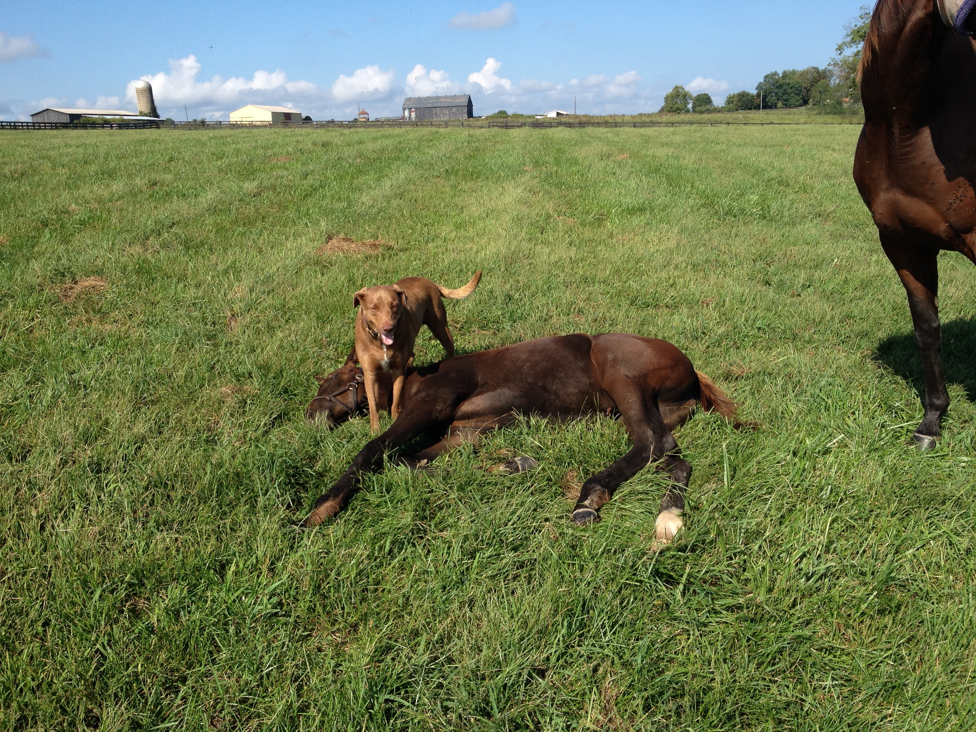 Crib for sale louisville ky - Duke The Dog Finds A Foal To Lie Down On In The Field